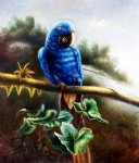 original a blue parrot standing on a branch by original paintings