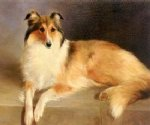 original paintings a collie rough painting