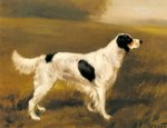 original english springer spaniel painting-28476