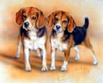original two beagles by original paintings
