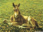 a horse 13 by original paintings