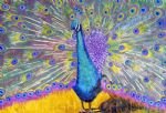 original   one peacock 4 painting