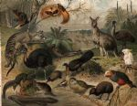 original australian animals birds australisk fauna nordisk familjebok paintings