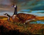original canada bird geese paintings