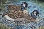 original canada geese birds photos painting 86432