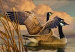 original canadian geese canada birds painting 86454