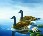 original goose canada birds painting