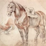 peter paul rubens etude of horse paintings 26781