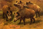 four boars in a landscape by rosa bonheur acrylic paintings