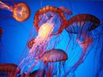 famous acrylic paintings - jellyfish 2 by sea life
