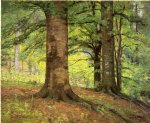 theodore clement steele art - beech trees by theodore clement steele