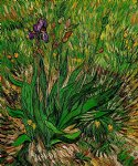 vincent van gogh the iris ii art